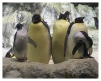 Penguins_4